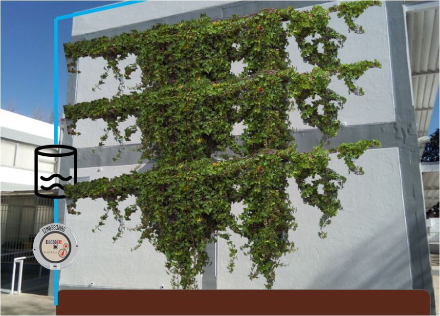 wall plant.JPG